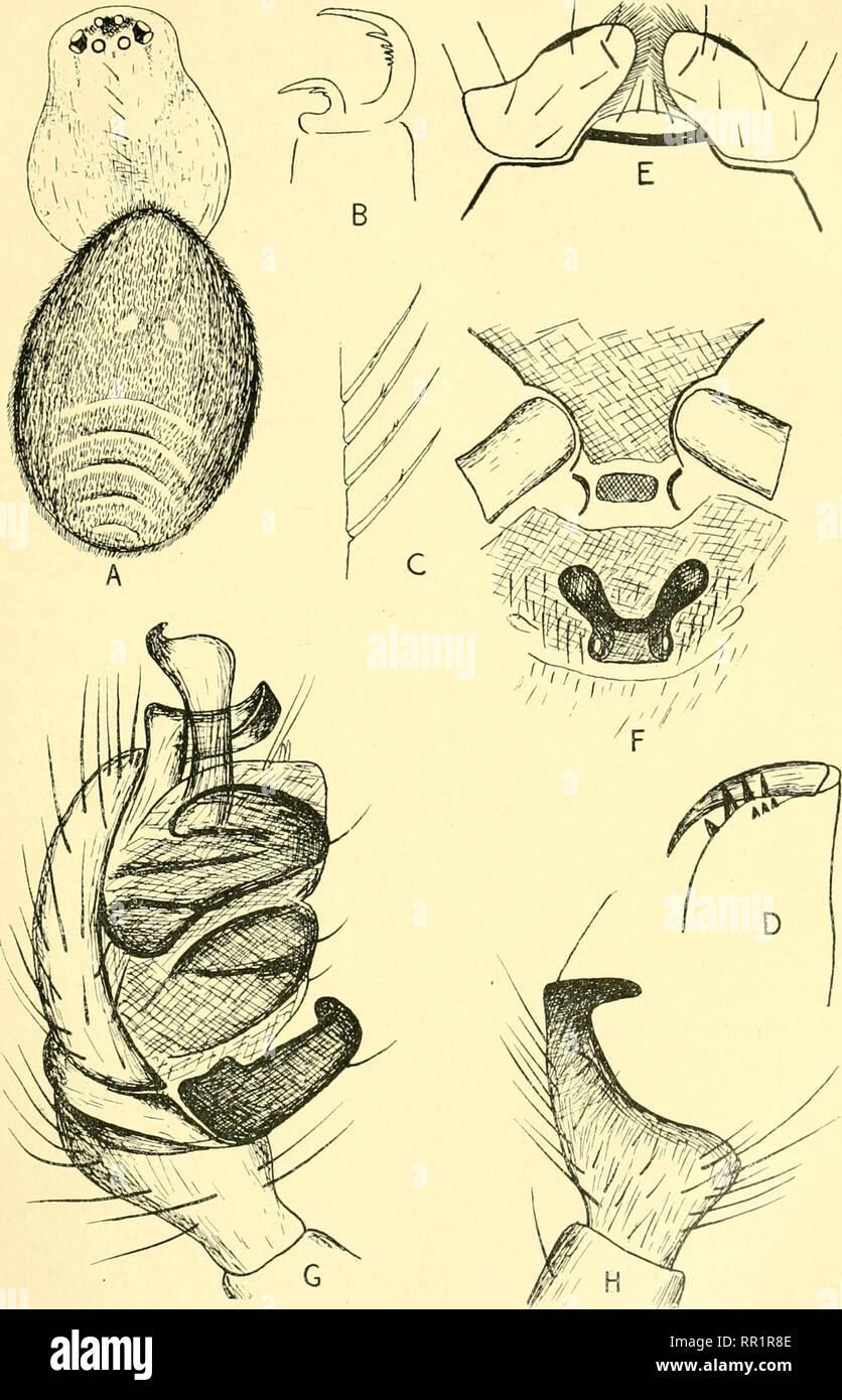 Vielfalt schamlippen Vulva