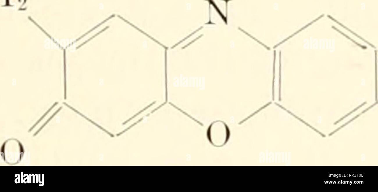 Die Actinomyceten Actinomycetales Die Chemische Natur Der