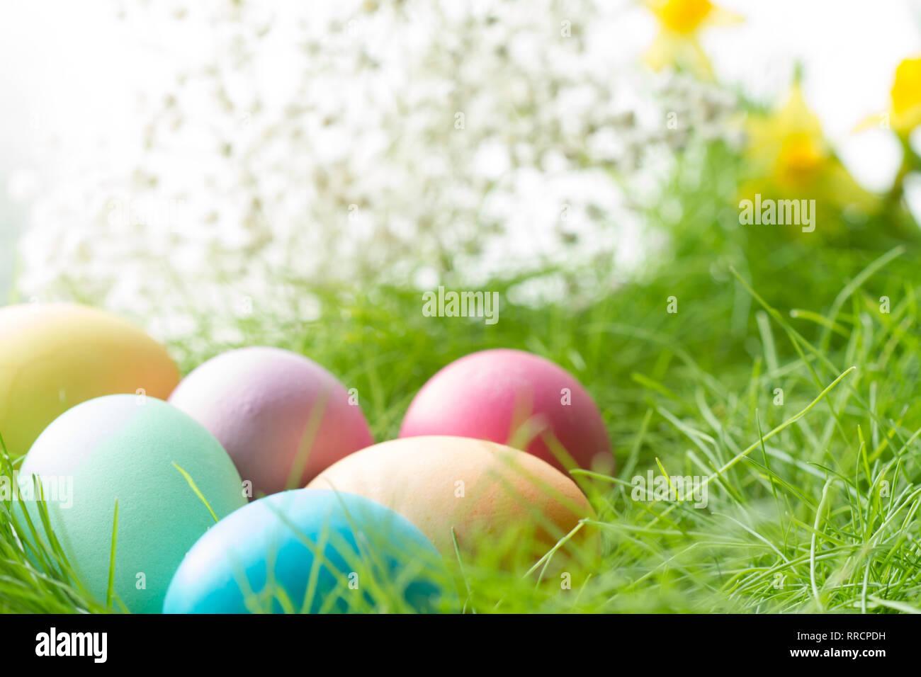 Ostern bunte Eier auf frühlingswiese im Sonnenlicht floral Abstract weiß grün Hintergrund Stockbild