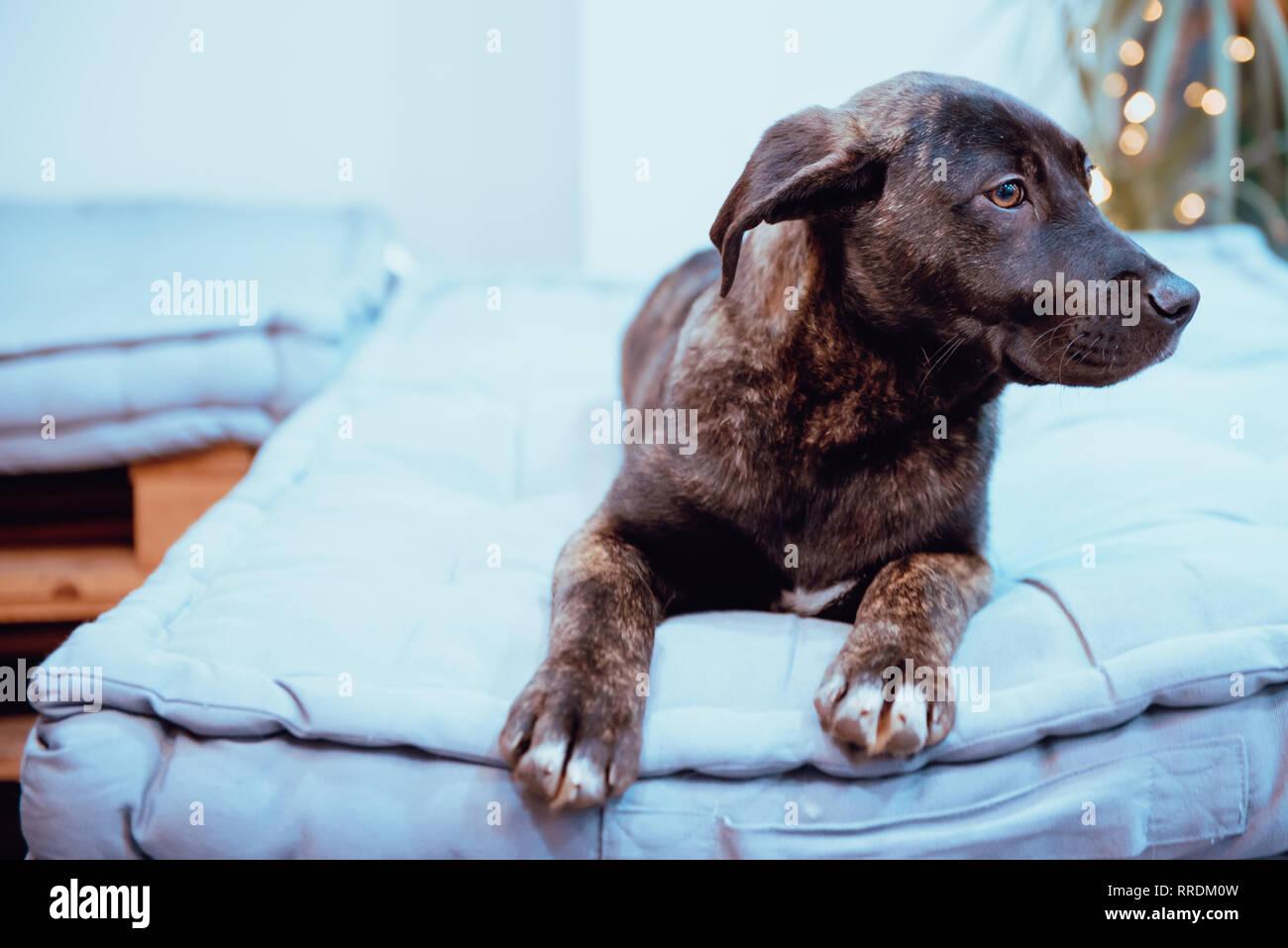 Hund am Boden liegend Stockbild