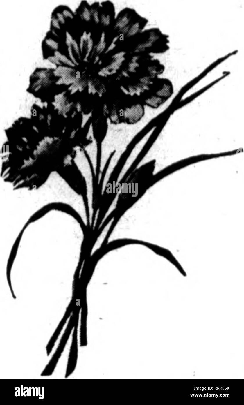 Floristen Review Microform Blumenzucht I I 1