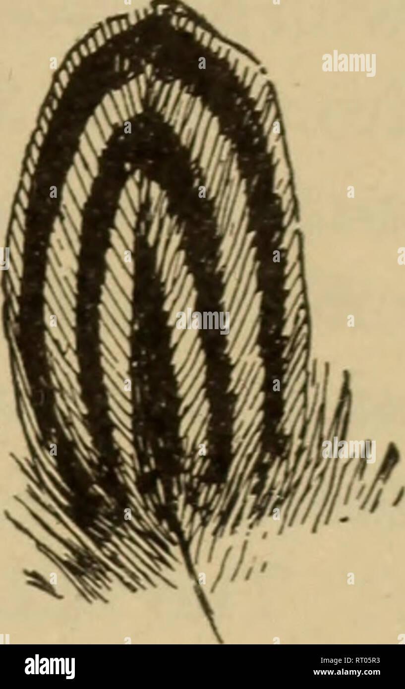 . Anfänge in der Tierhaltung. Vieh und Geflügel. . Bitte beachten Sie, dass diese Bilder sind von der gescannten Seite Bilder, die digital für die Lesbarkeit verbessert haben mögen - Färbung und Aussehen dieser Abbildungen können nicht perfekt dem Original ähneln. extrahiert. Plumb, Charles S. (Charles Sumner), 1860-1939. St. Paul, Minn., Webb Publishing Co. Stockfoto