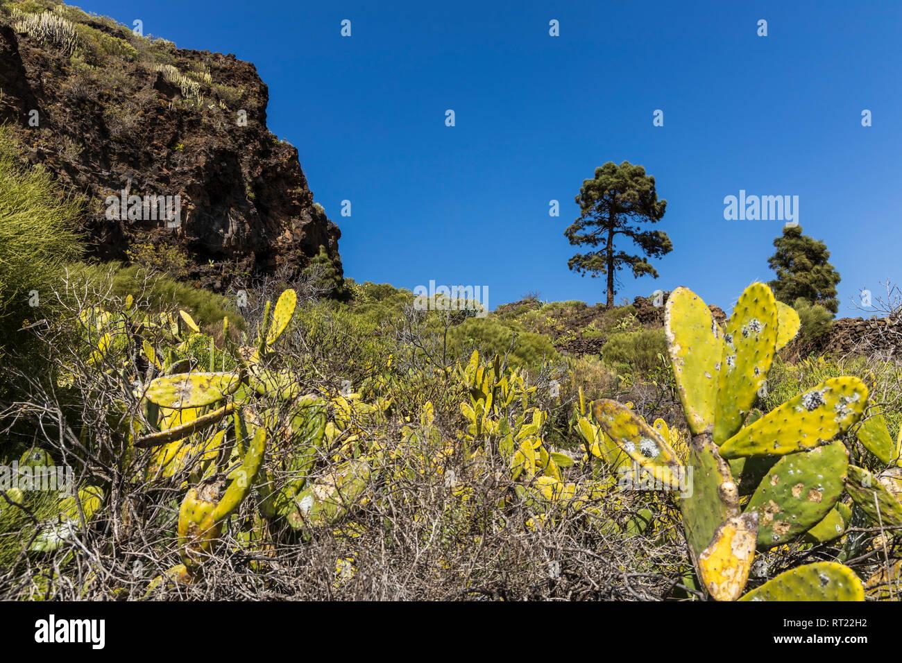 Felsen und Klippen in der Nähe von Tamaimo in Santiago del Teide, Teneriffa, Kanarische Inseln, Spanien Stockbild