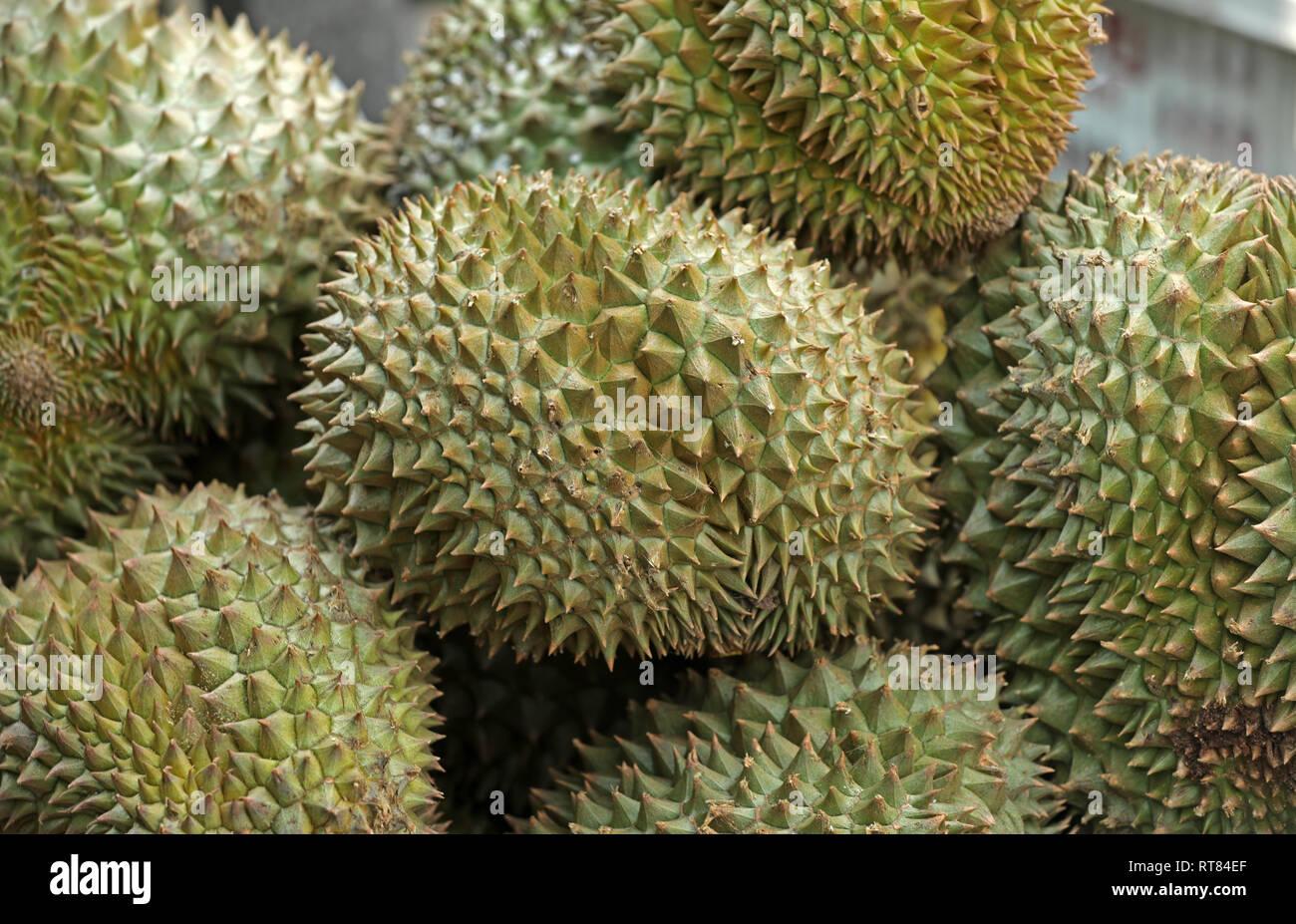Durian Frucht stinken Obst Stockbild