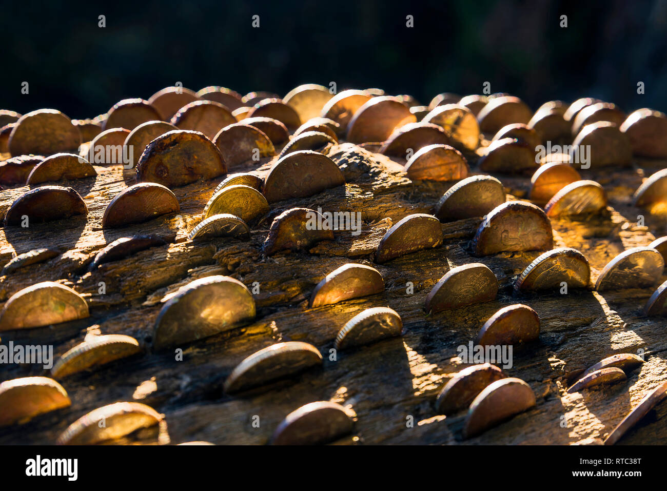 Hämmern Münzen in einen Baum centuires Trunks ist eine alte Tradition, die für einige sagten zu bringen Glück und oder anderen Erkrankungen der Vario zu heilen Stockbild