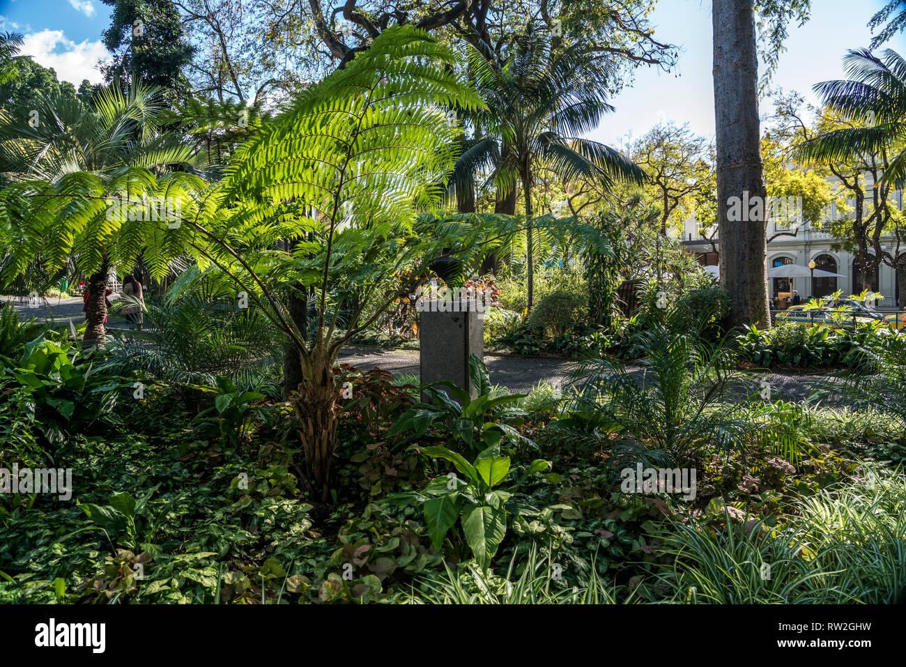 Farn im Stadtpark Jardim Municipal do Funchal, Funchal, Madeira, Portugal, Europa | Farn im Park Jardim Municipal, Funchal, Madeira, Portugal, Eu Stockbild