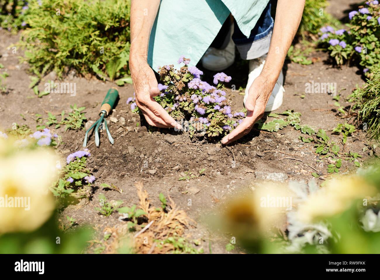 Frau Blumen Pflanzen im Garten in der Nähe von Stockbild