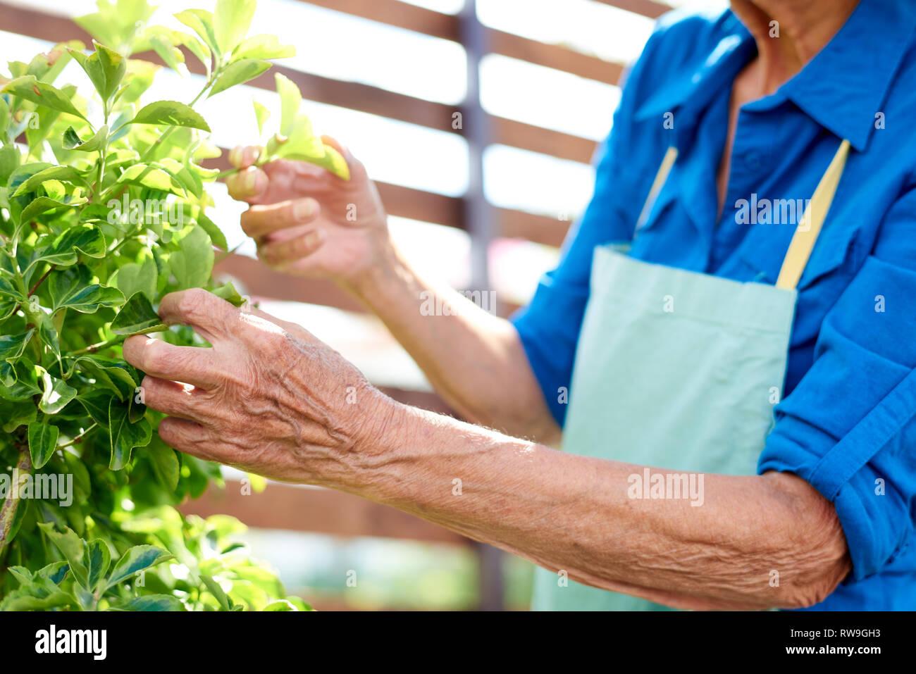 Nicht erkennbare Senior Gärtner Stockbild