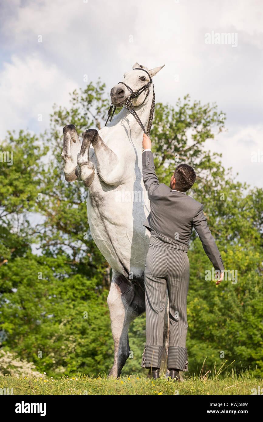 spanisches pferd folter