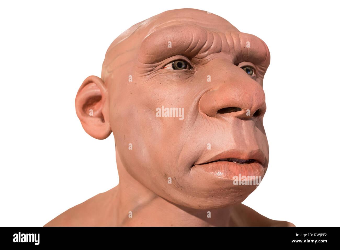 Córdoba, Spanien - 2. März, 2019: Lebensgroße Neanderthal Büste in Montilla Heimatmuseum, Cordoba, Spanien. Von JM Serrano geformt Stockbild