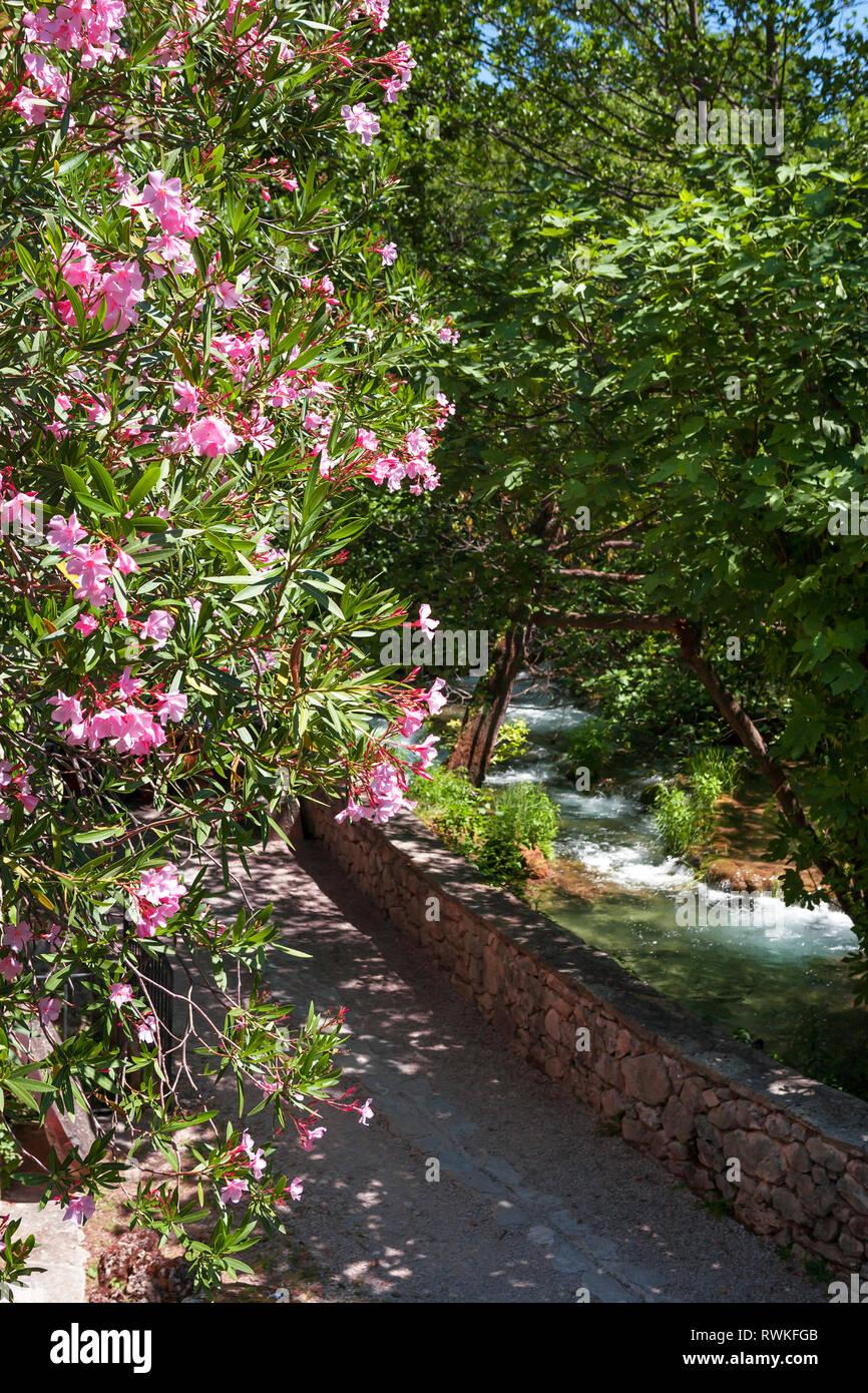 Oleander blüht durch den Fluss Krka, Sibenik-Knin, Kroatien Stockbild