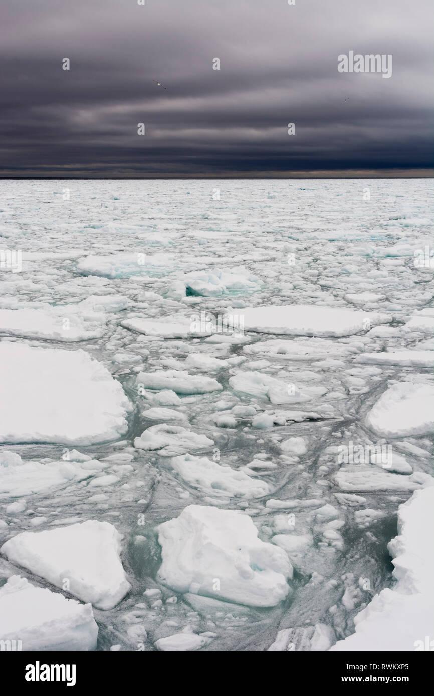 Floating Stücke von Packeis, Polar Ice Cap, 81 nördlich von Spitzbergen, Norwegen Stockbild