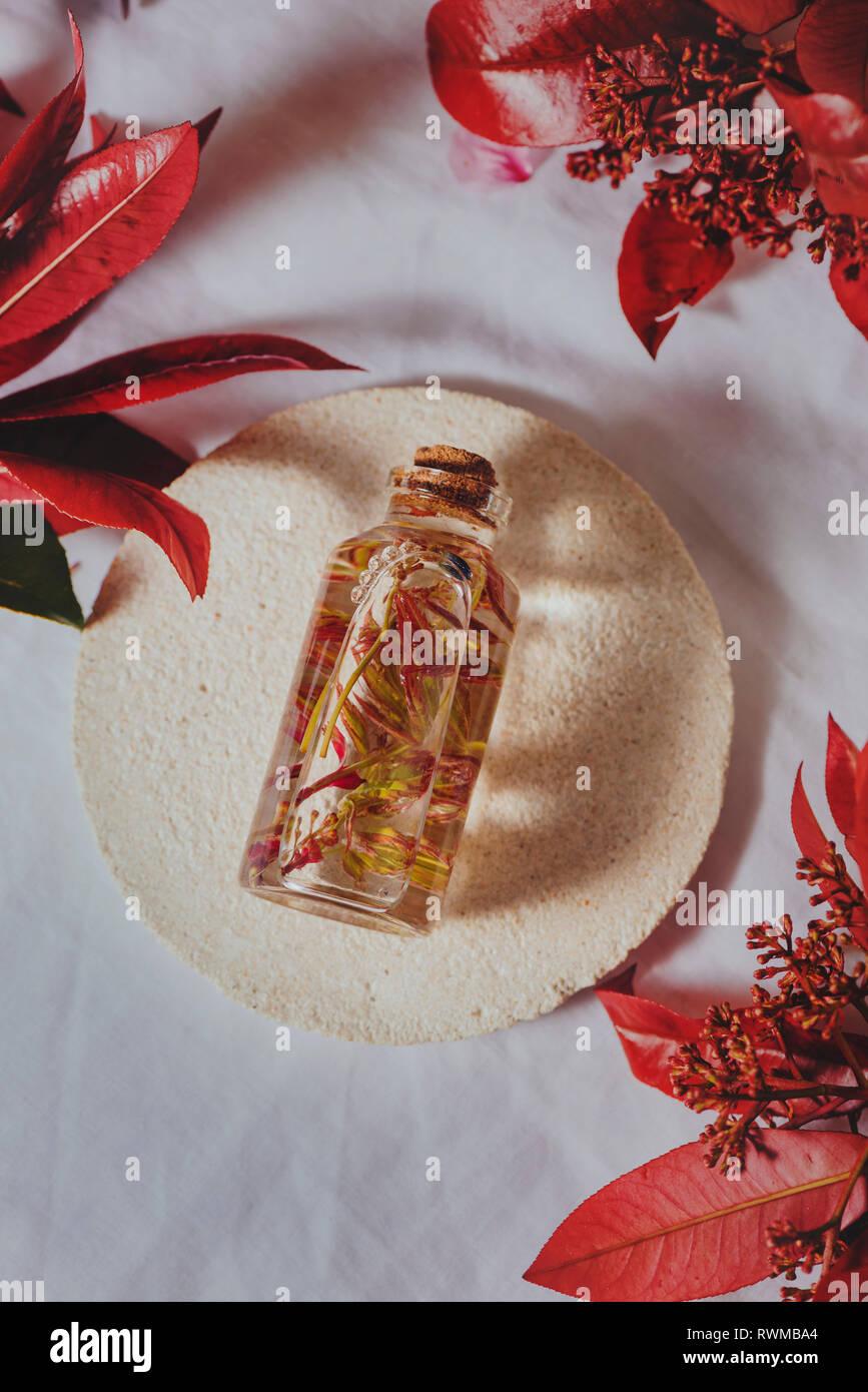 Mit frischen Pflanzen in Flüssigkeit zwischen Laub Flasche Stockbild
