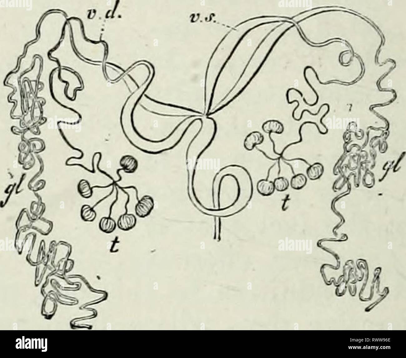 Kunst der Blasenröhre