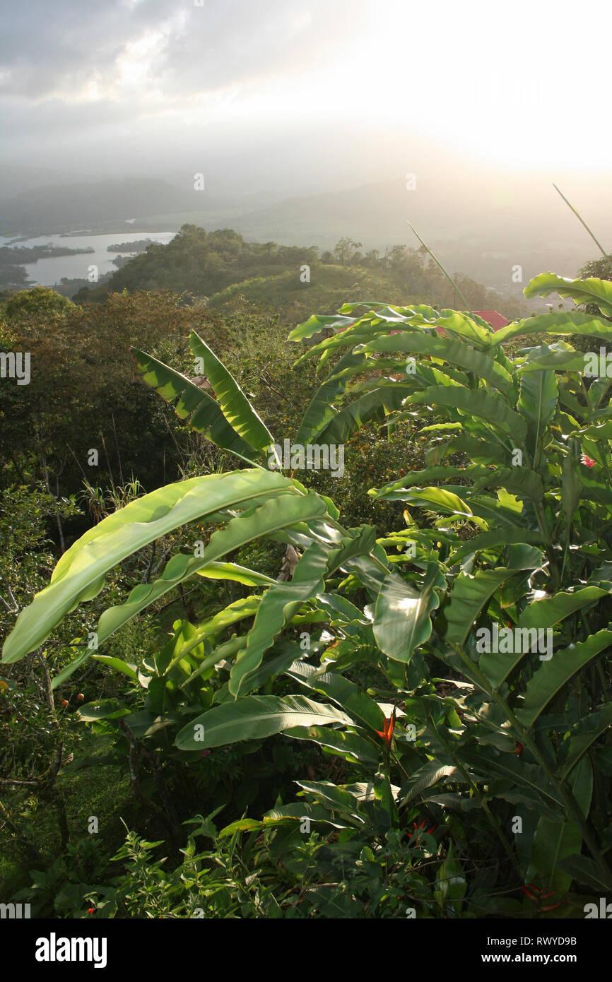 Üppige tropische Vegetation, Costa Rica Stockbild