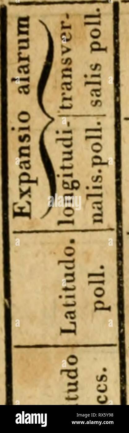 Eine Lektüre in die Entomologie Stockbild