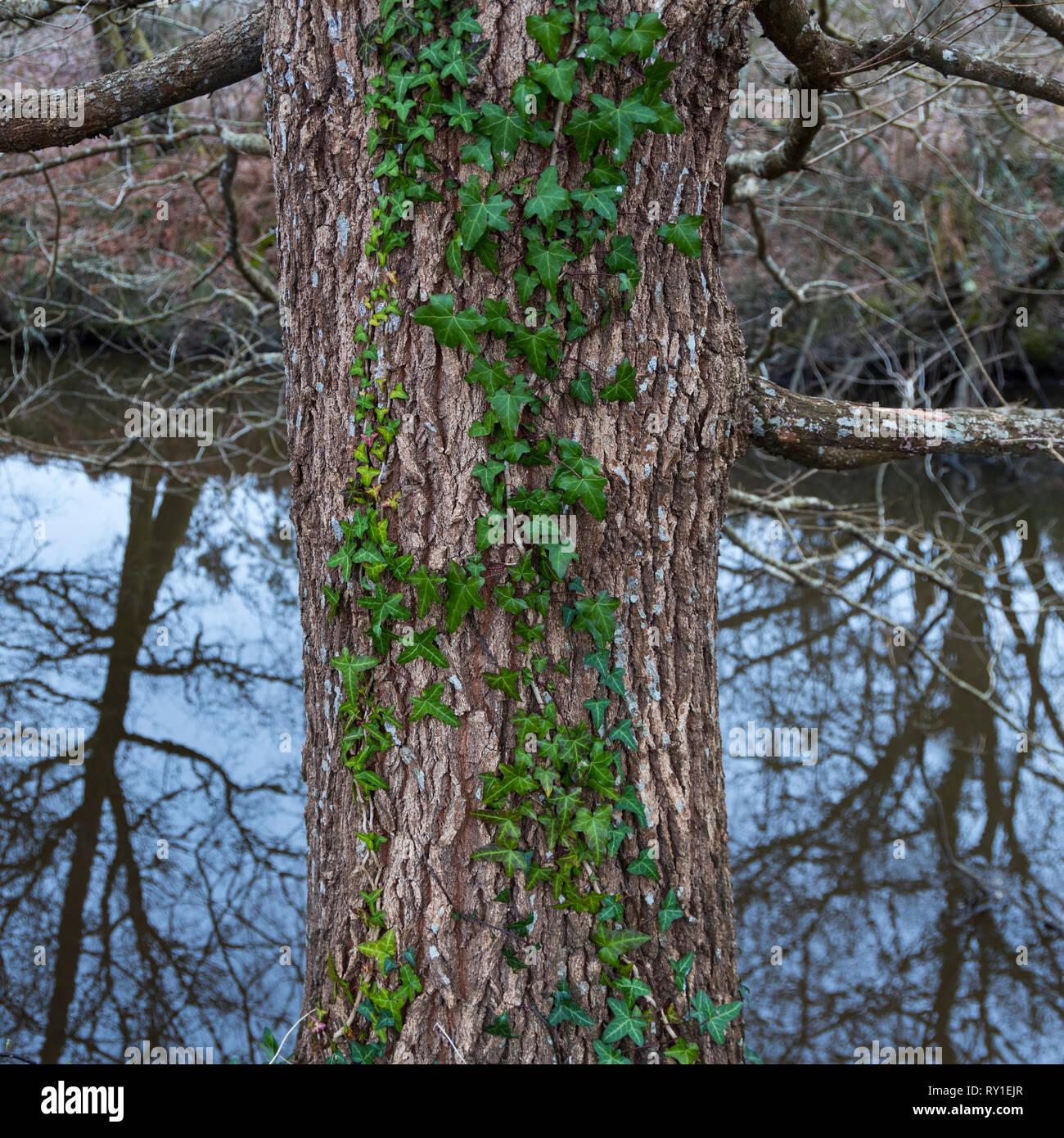Réserve naturelle des Marais d'Orx, Labenne, Landes, Nouvelle-Aquitaine, Frankreich, Europa Stockbild