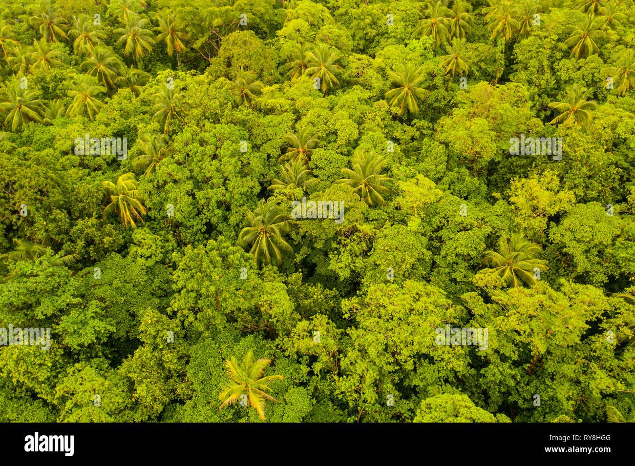 Luftaufnahme des üppigen Regenwaldes in Papua-neuguinea. Diese Region birgt außergewöhnliche Artenvielfalt. Stockbild