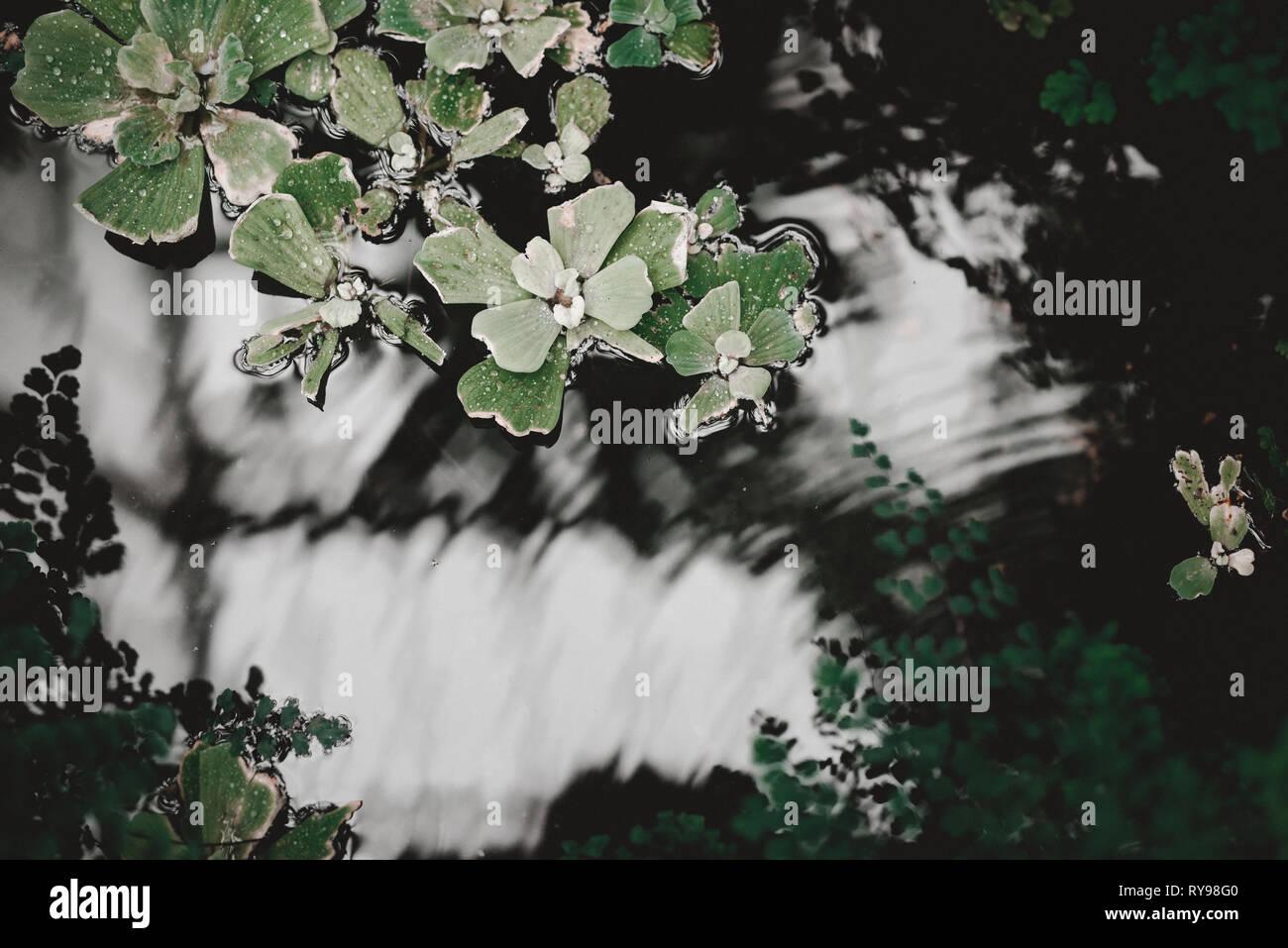 Grüne erstaunliche Zimmerpflanze auf Fensterbank auf unscharfen Hintergrund in London Stockbild