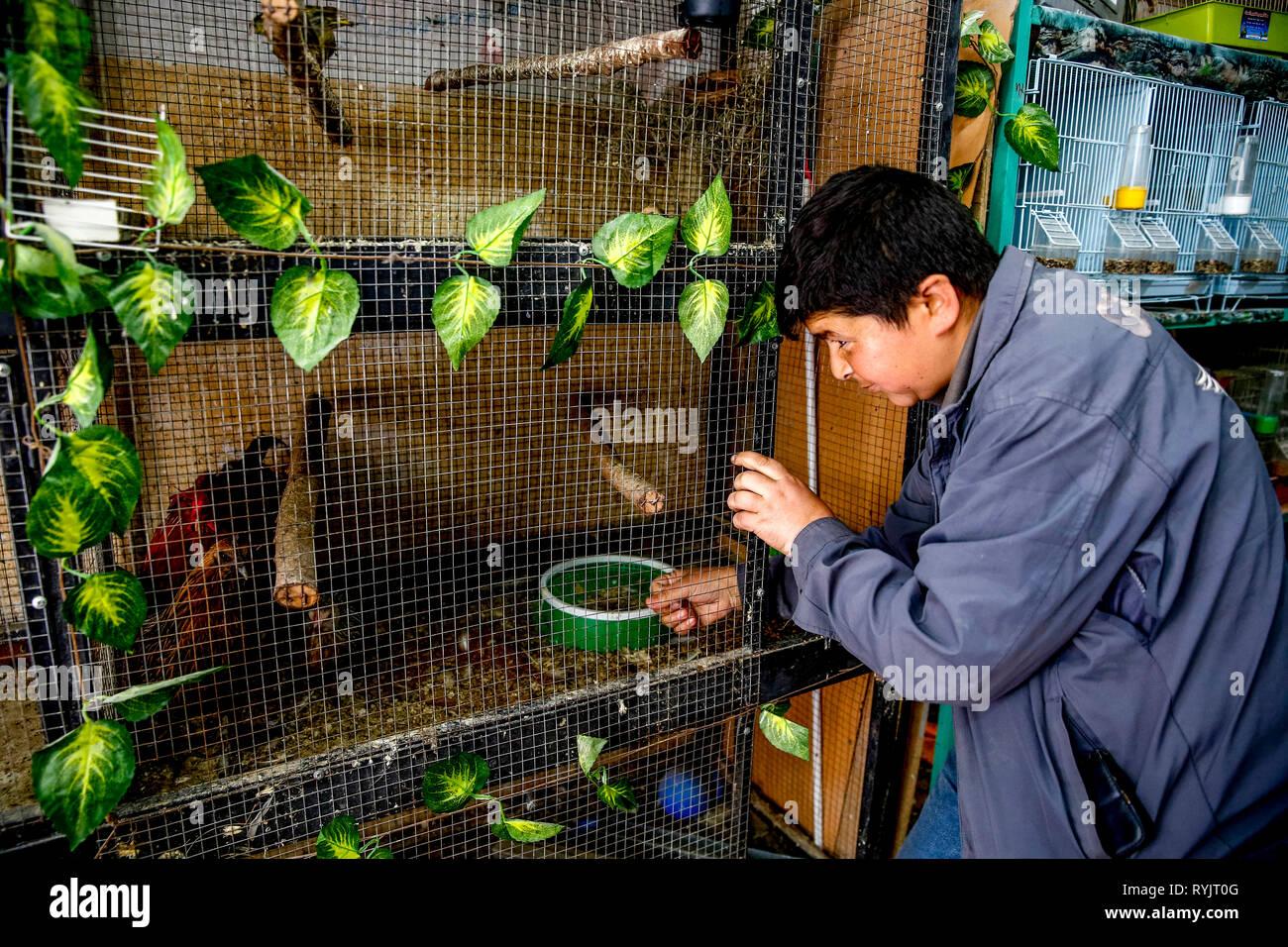 Jihad Abed Al-Aziz Shahatit erhielt ein zinsloses Darlehen in Höhe von US $ 4000 ACAD finanzieren zu erweitern und seinen Vogel shop in Dura, West Bank, Palesti liefern Stockbild