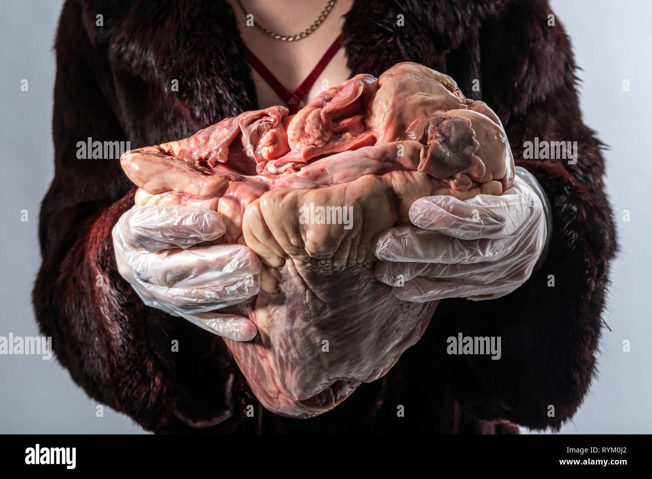 Gesundheitswesen und Medizin, Tierarzt, Anatomie, tier, tiere, tier, Tier, Tier internen Organ, Tier Muskel, Vegetarismus Stockbild