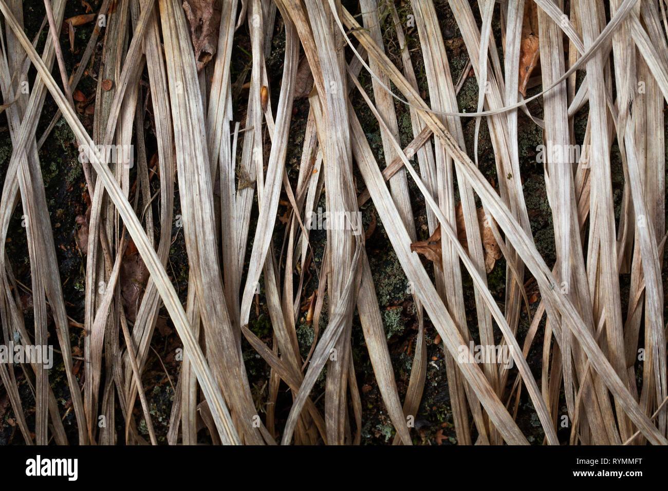 Strukturen in trockenes Gras, Nahaufnahme Stockbild