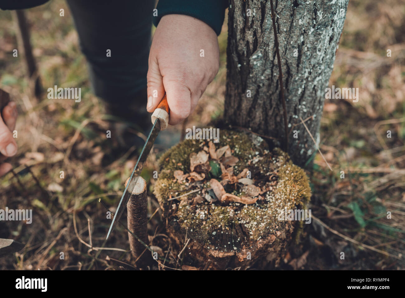 Nussbaum verpflanzen