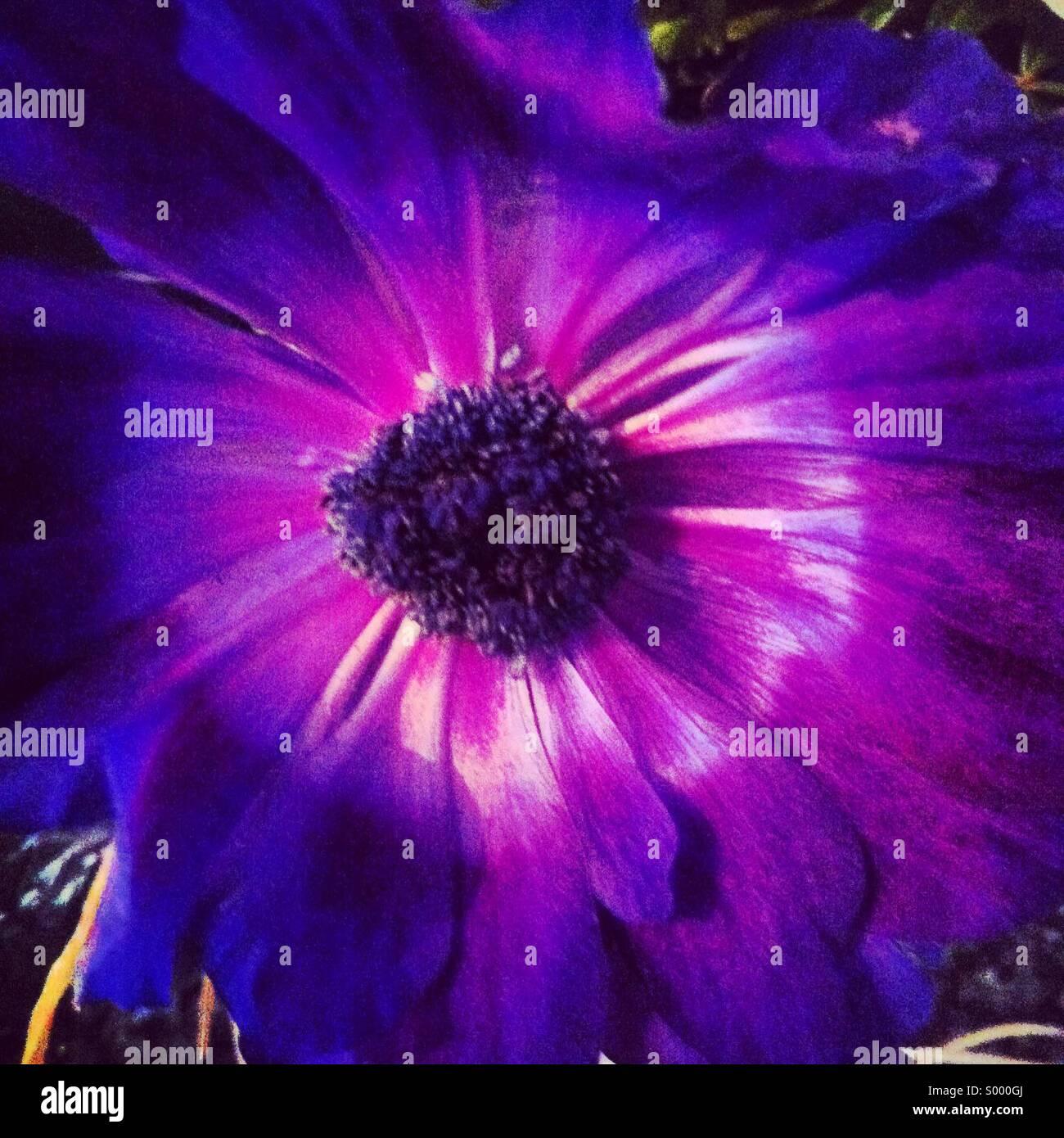 Lila Blume Stockbild