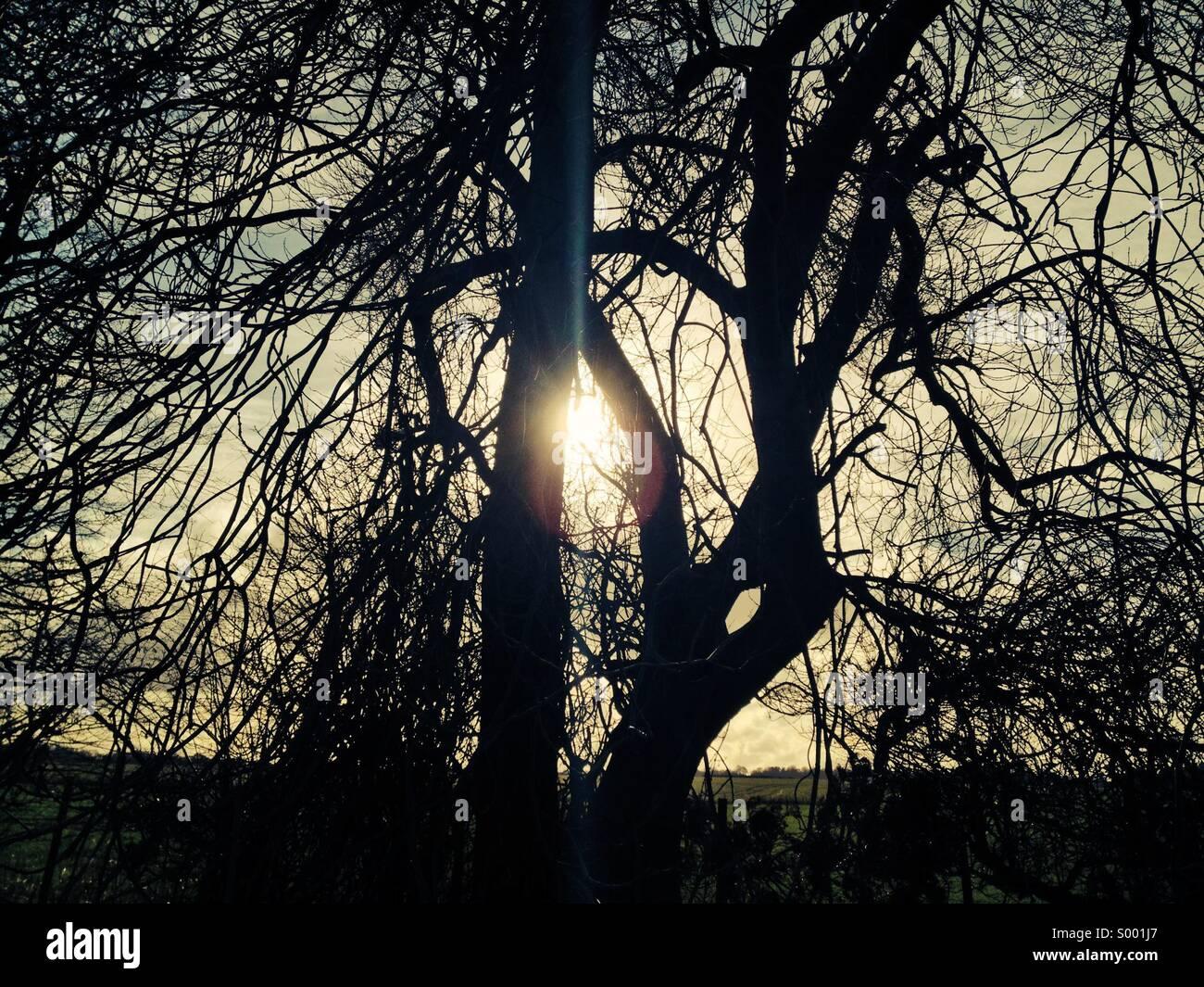 Sonnenlicht und alten Baum Stockbild