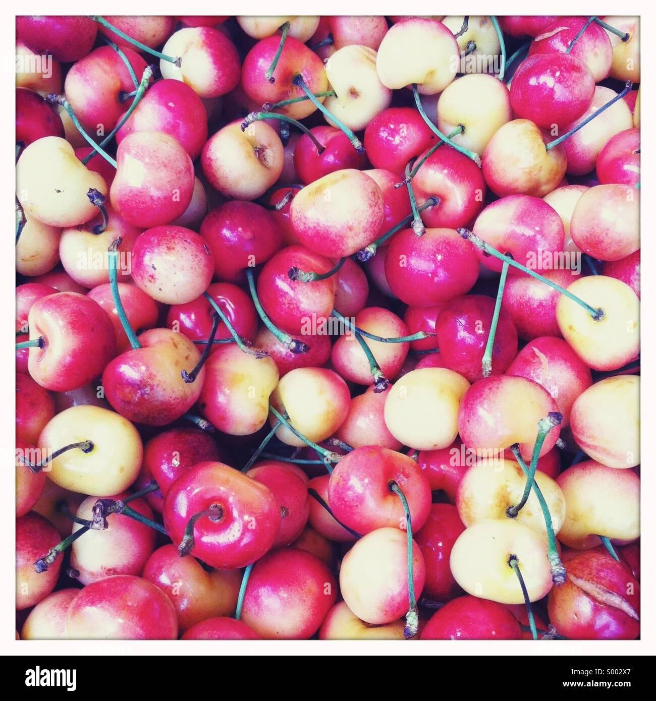 Eine Nahaufnahme von frisch gepflückten roten und weißen Kirschen mit Stielen Stockbild