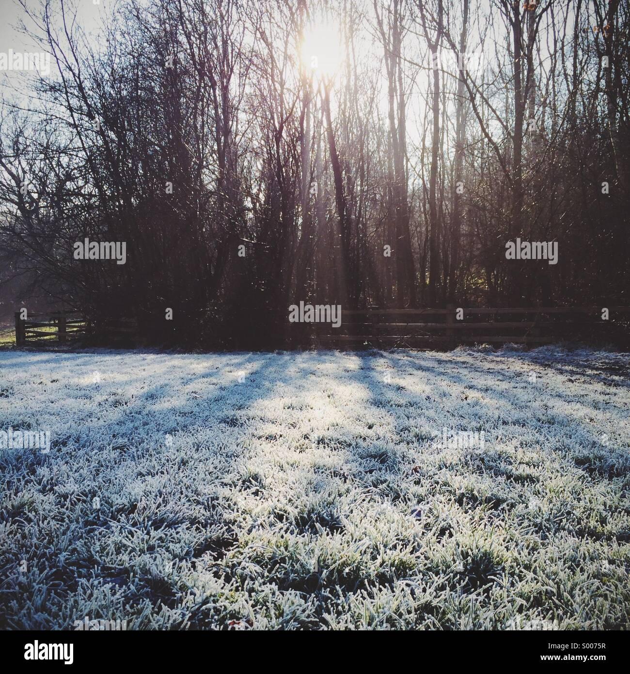 Tief stehender Sonne durch Bäume und Schatten auf einem Flecken des Grases, der mit einem harten Frost fällt Stockbild