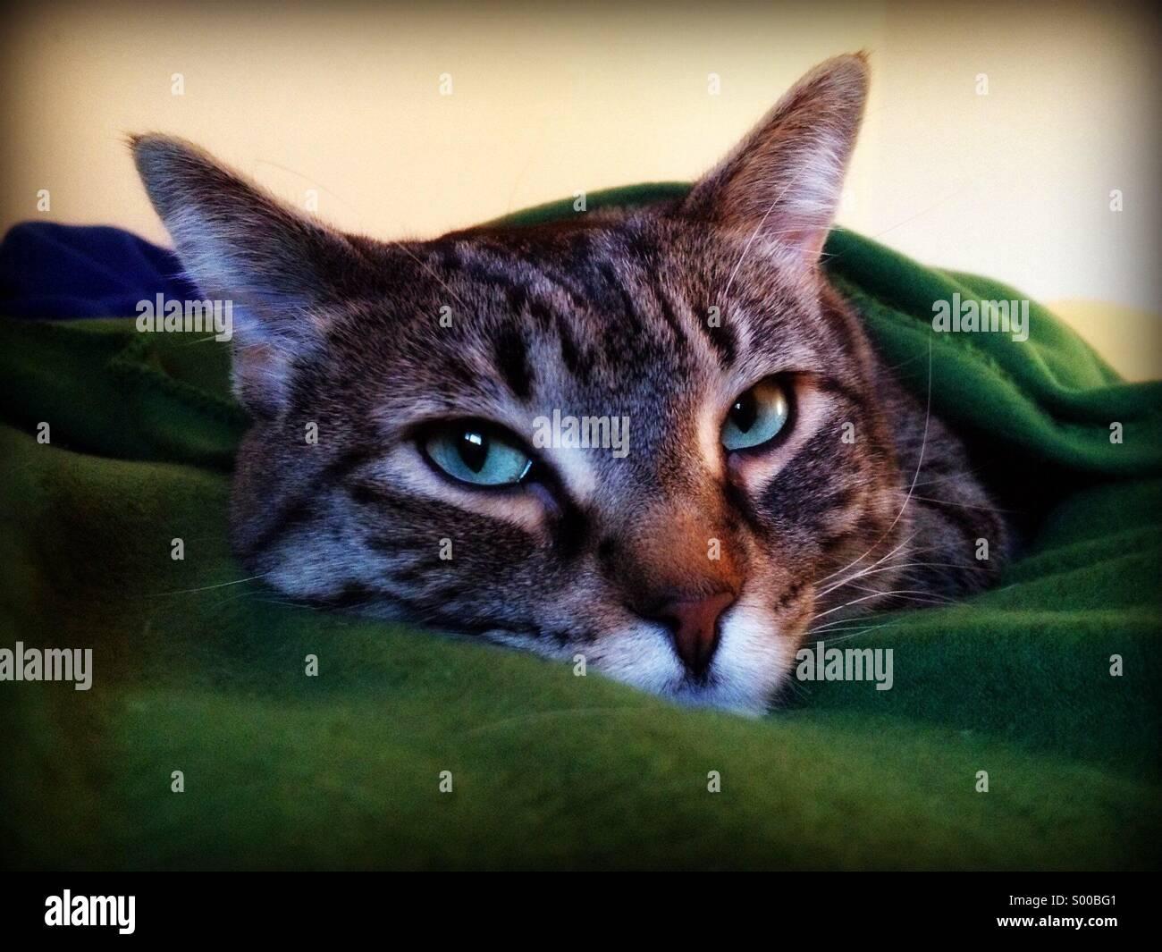 Sleepy Tabby Cat Stockfotos & Sleepy Tabby Cat Bilder - Seite 13 - Alamy