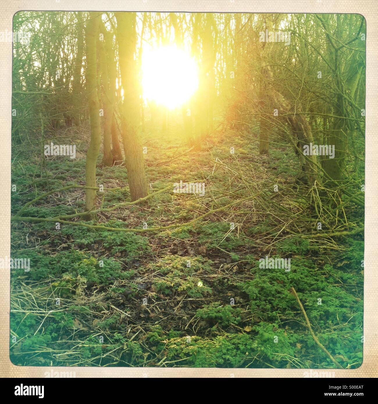 Tief stehender Sonne durch den Wald Stockbild