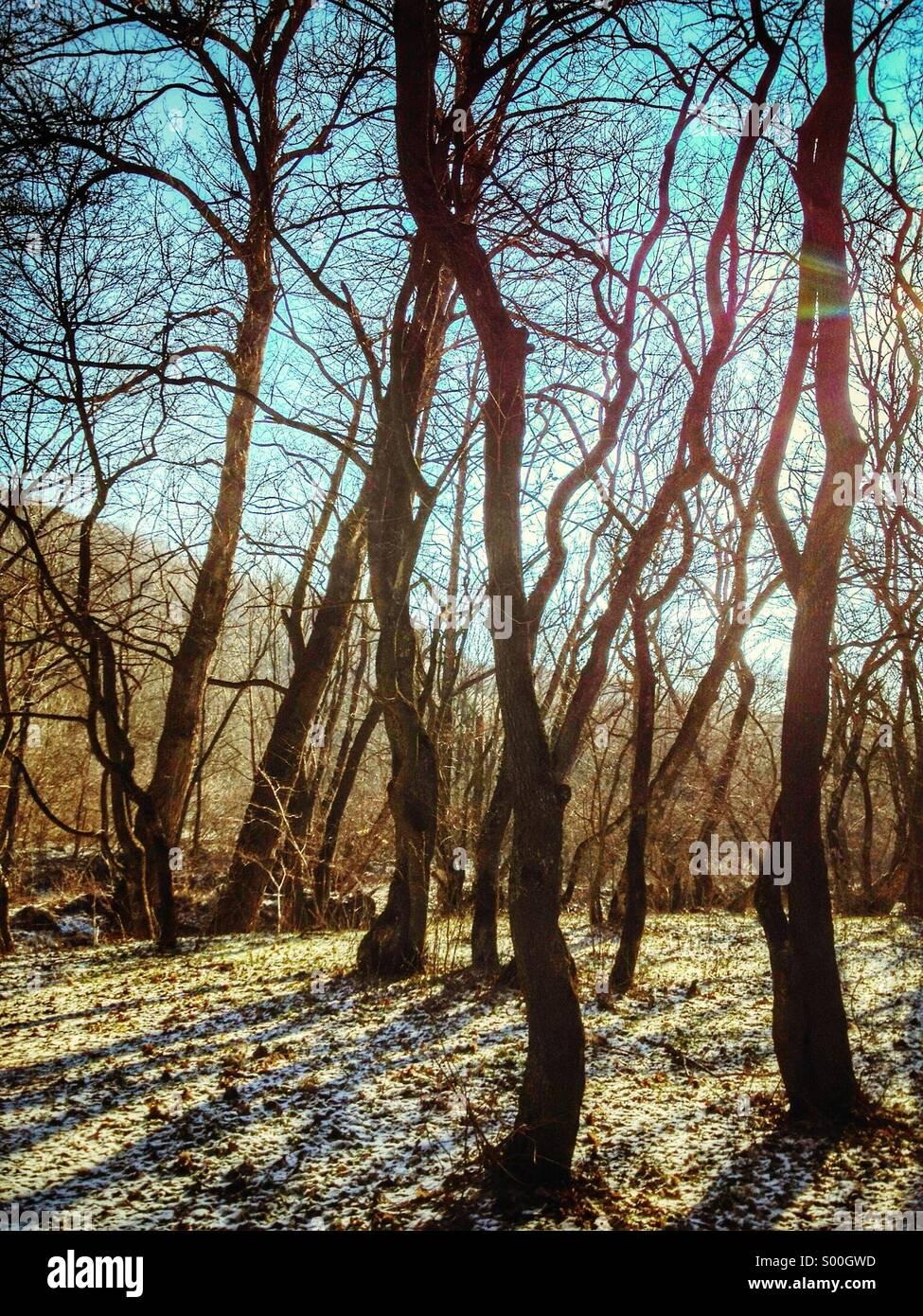 Waldbäume Stockbild