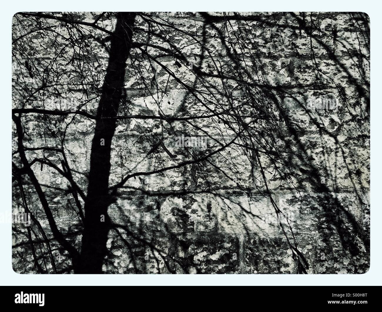 Baum Ast Schatten an der Wand Stockbild