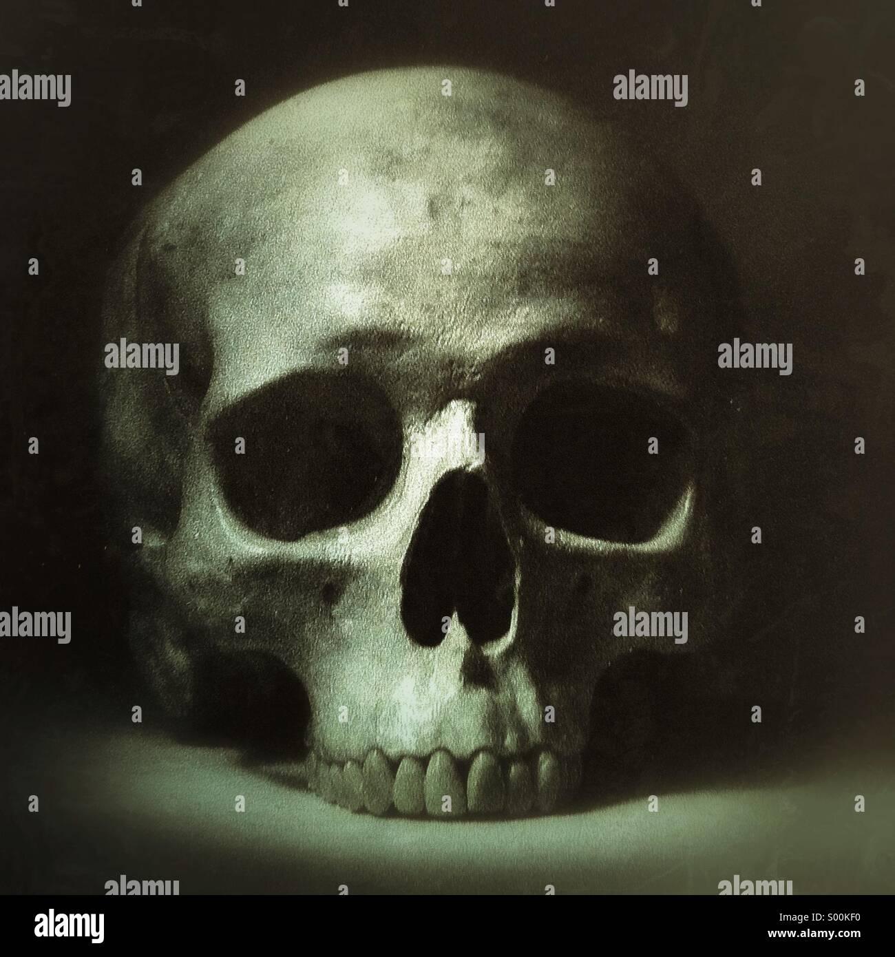 Menschlicher Schädel Stockbild