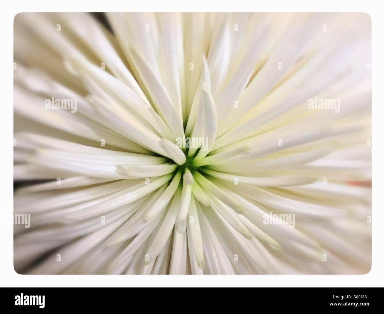 Nahaufnahme von weiße Blume. Stockbild