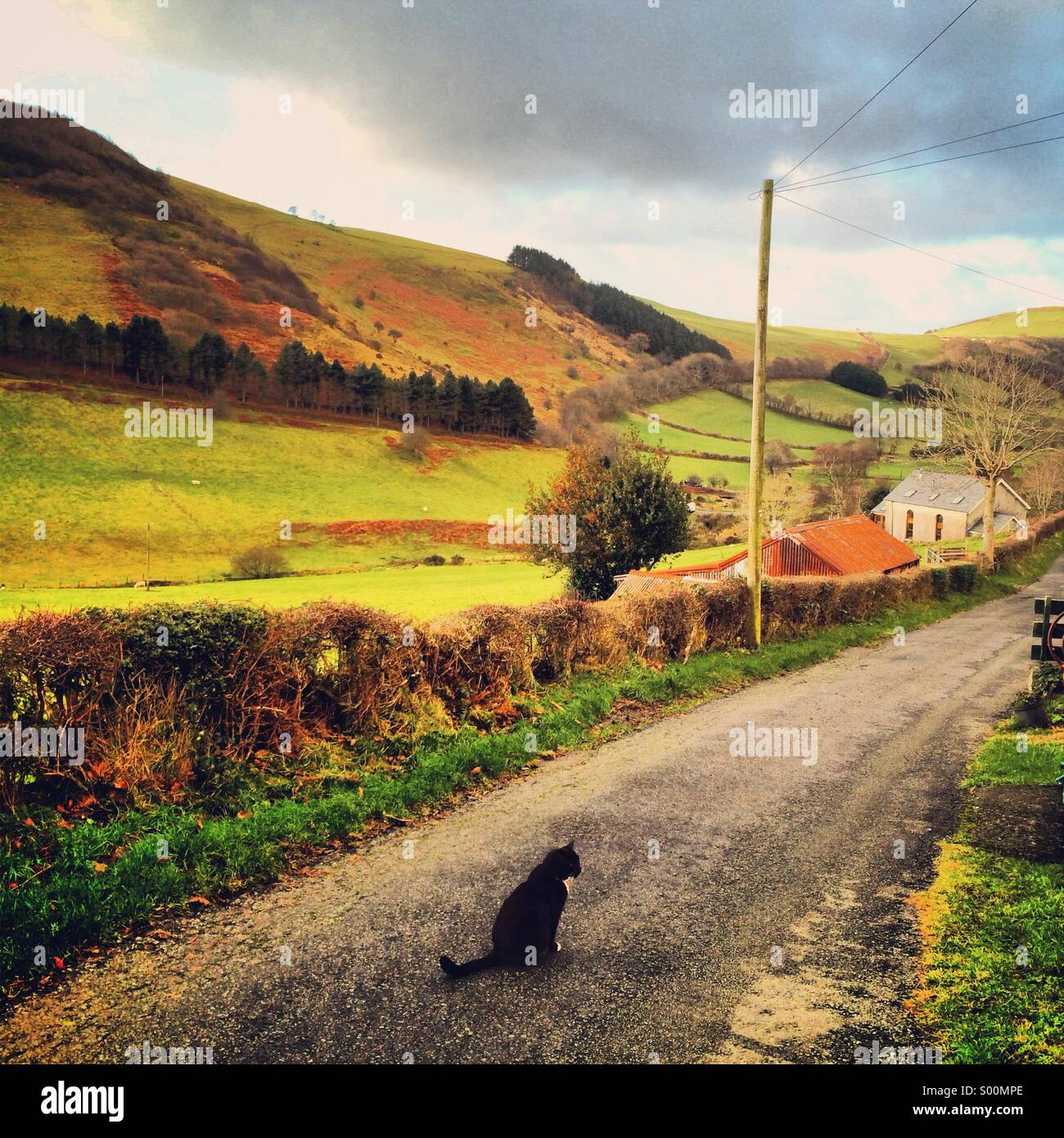 Schwarze Katze, die Bewachung ihrer Domäne! Stockbild