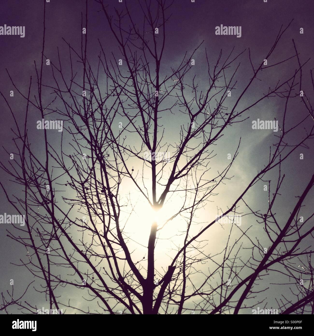Sonne hinter Baum im Winter. Stockbild