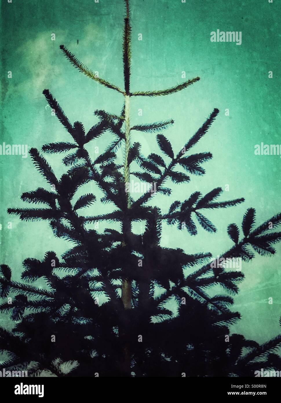 Alpine Baum Grunge Texturen Stockbild