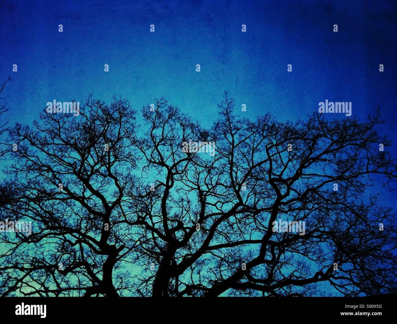 Baum Zweige blau Grunge Texturen Stockbild