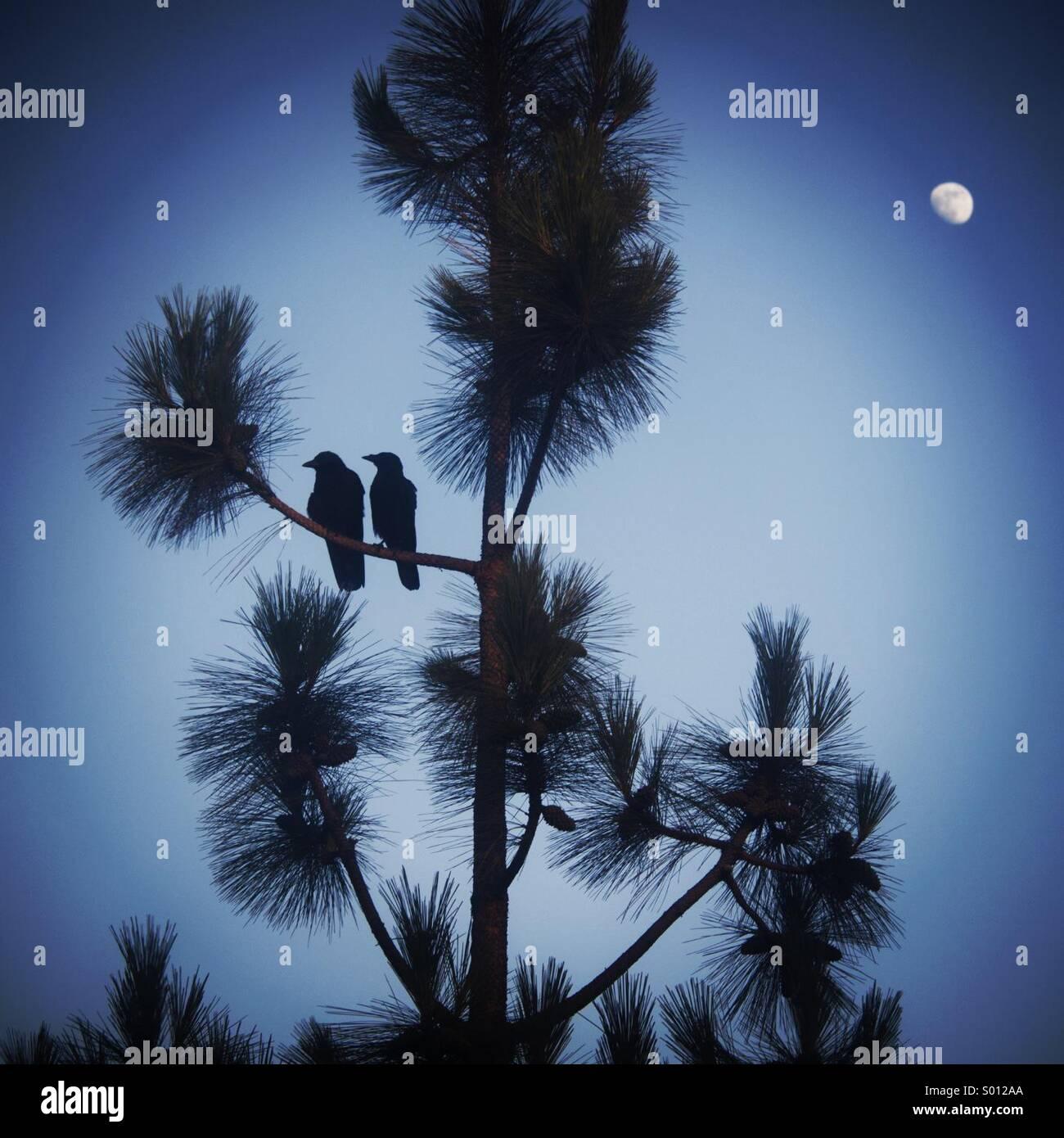 Liebe Vögel in einem Baum. Stockbild