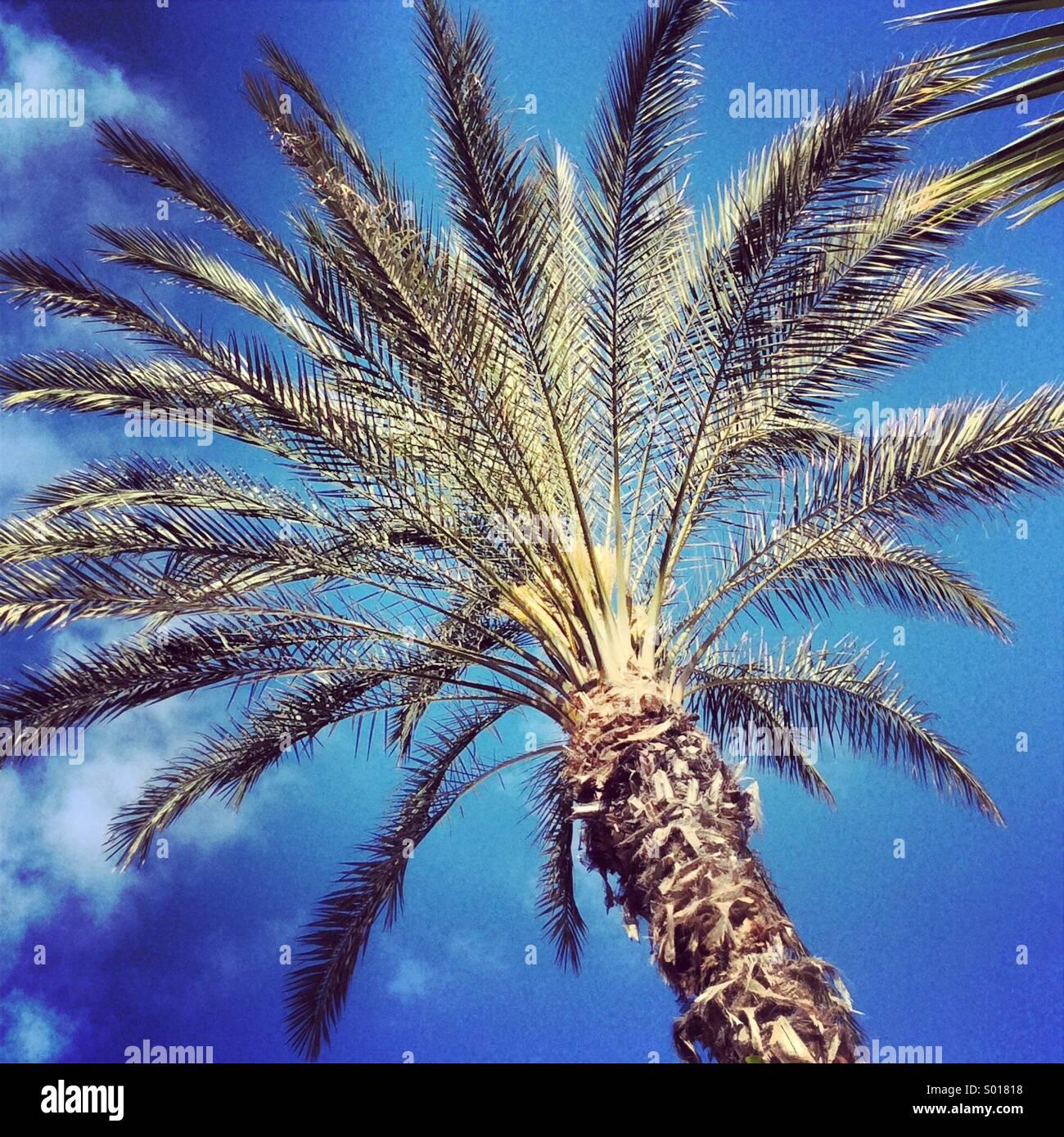 Palme auf den Kanarischen Inseln Stockbild