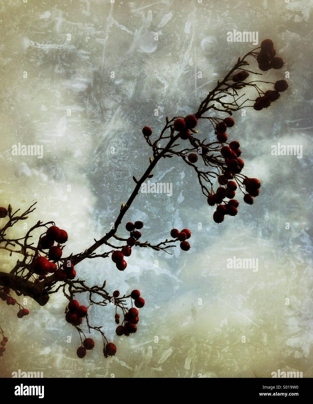 Wilde Beeren Grunge Texturen Stockbild