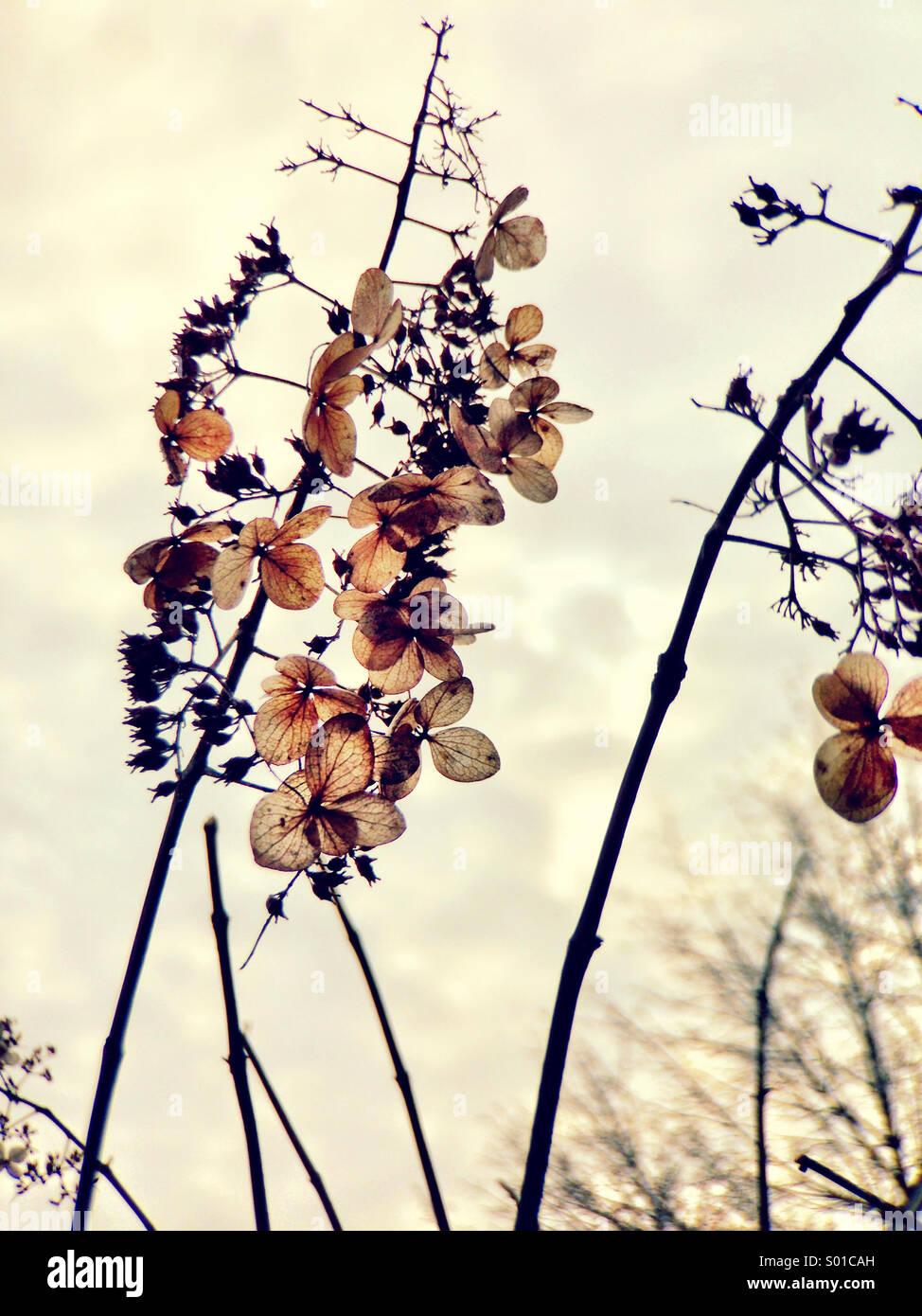 Trockene Blumen im Winter. Stockbild