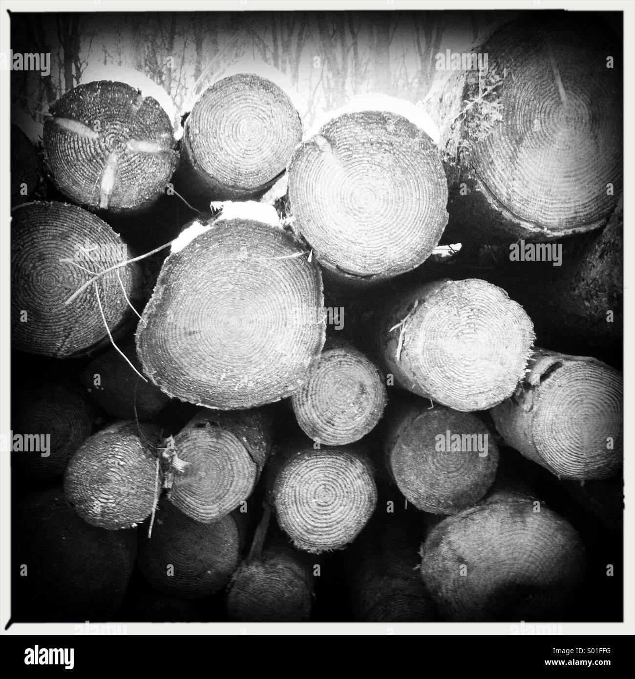 Enden der gefällten Baumstämme in einem Stapel Stockbild