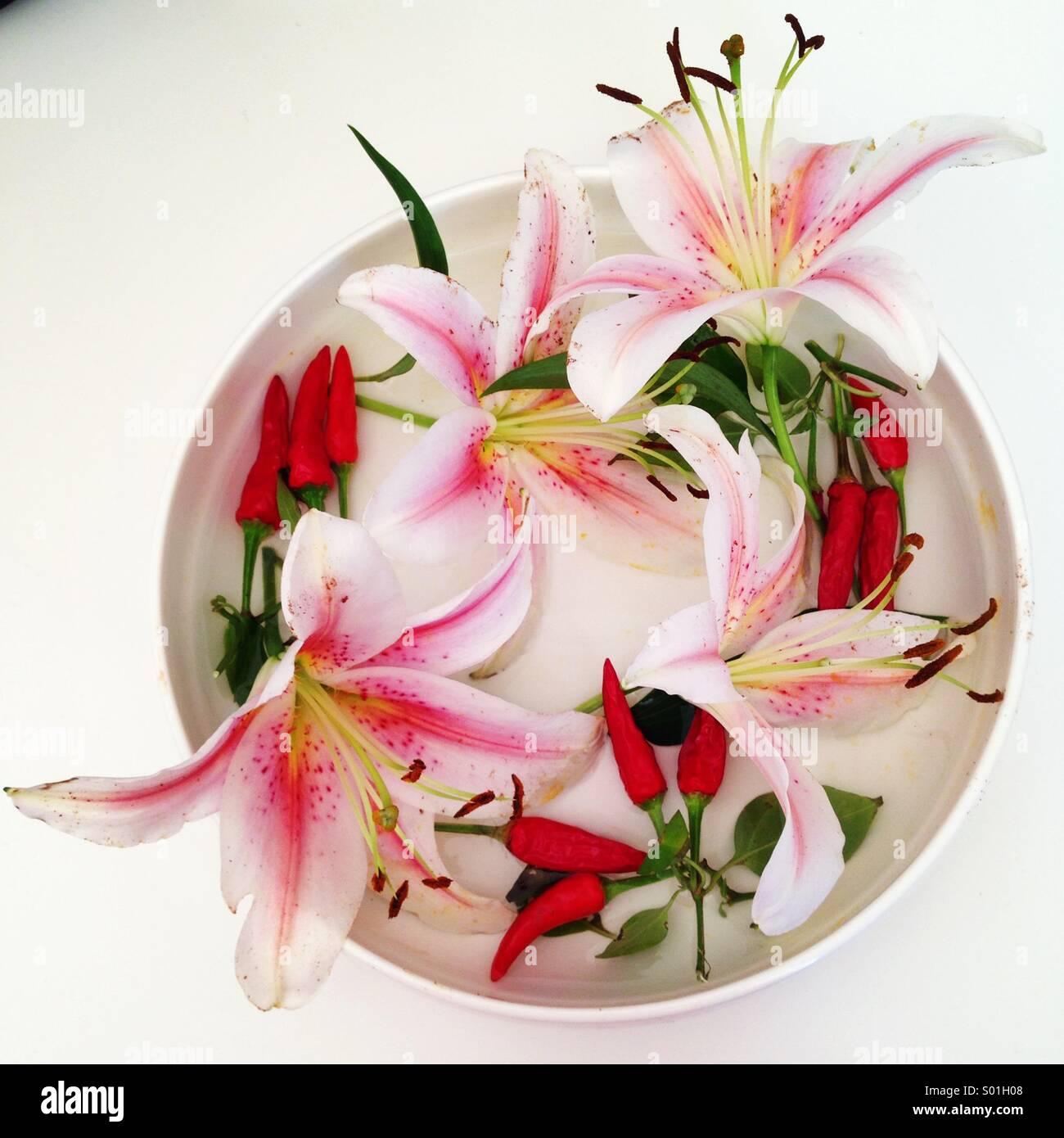 Lilien und Chillies Blume Display in kreisförmige weiße Porzellanschale Stockbild
