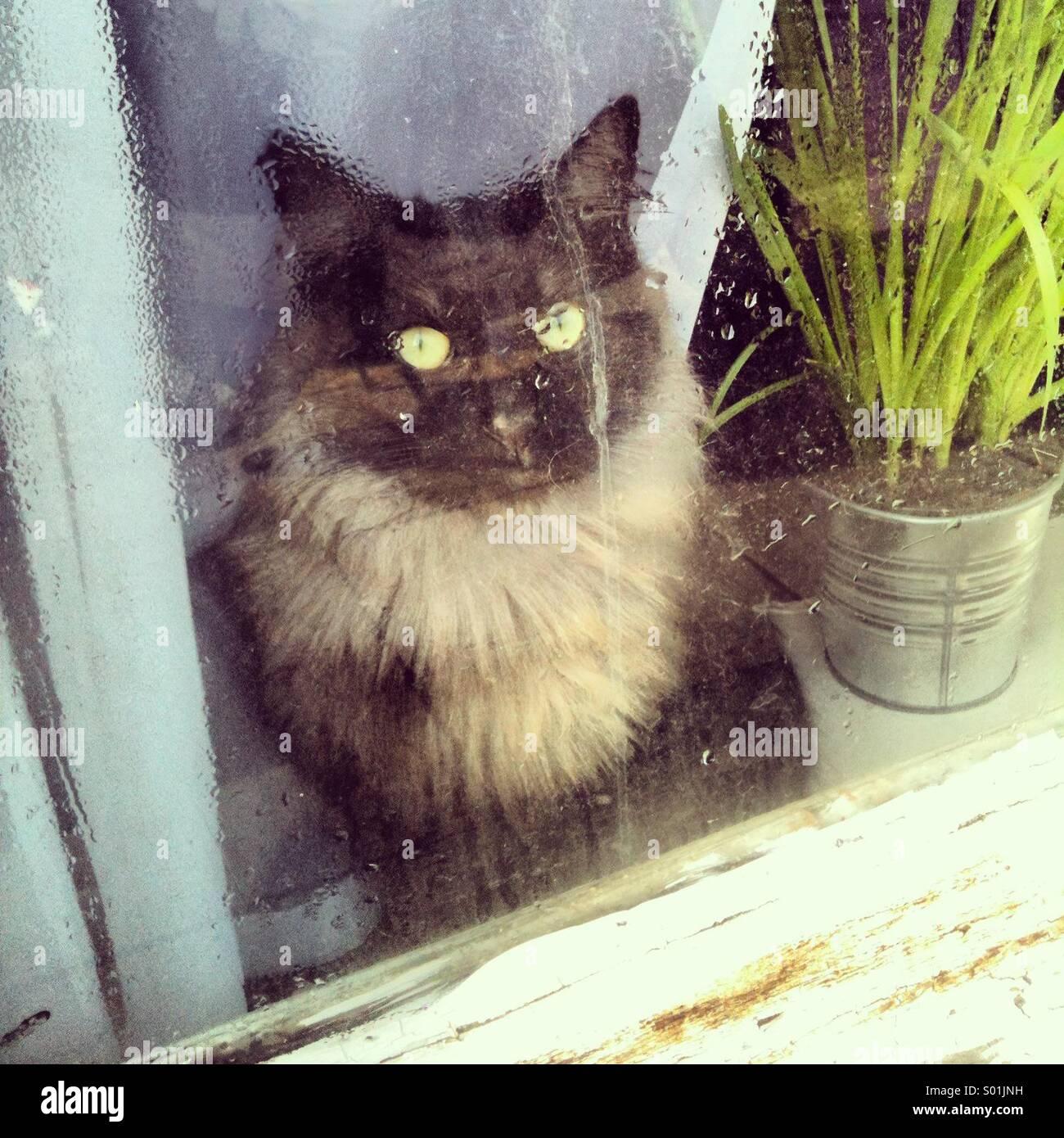 Katze auf nasse Fenster Stockbild