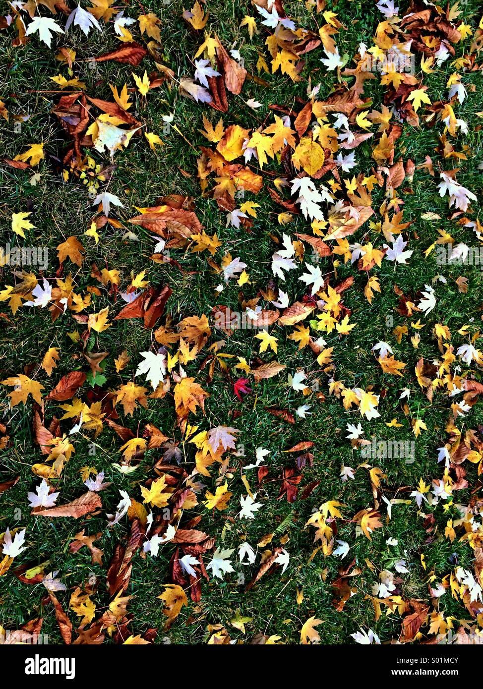 Herbstlaub liegend auf der grünen Wiese Stockbild