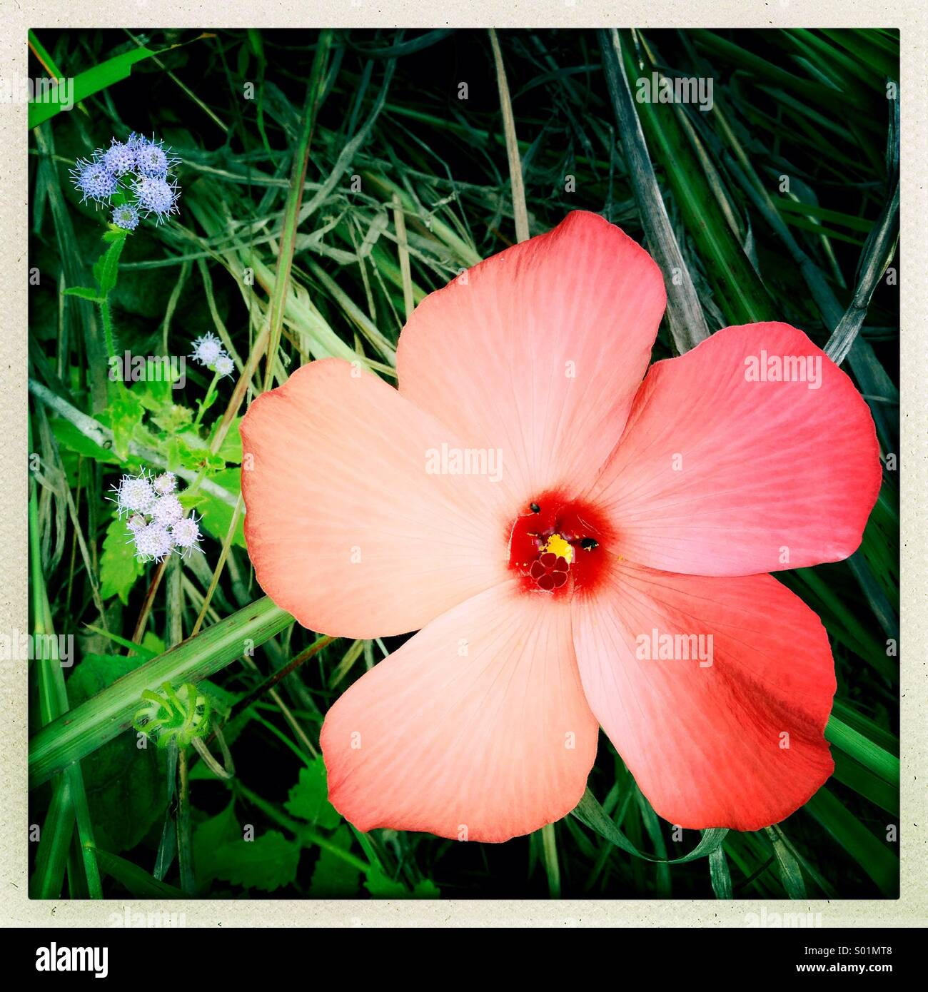 Bush-Land-Blume Stockbild